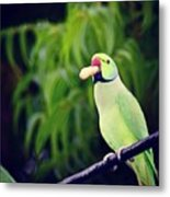Have You Gone Nuts  Metal Print