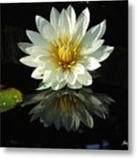 Haven Hospice Water Lily Metal Print