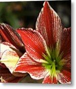 Hawaii Flora 11 Metal Print