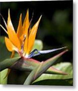 Hawaii Flora 13 Metal Print