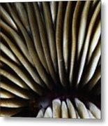 Hawaii Mushroom Coral Metal Print