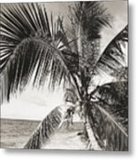 Hawaii Ocean Palm Metal Print