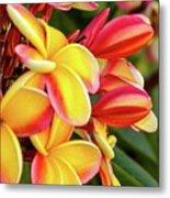 Hawaii Plumeria Flowers In Bloom Metal Print