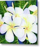 Hawaii Tropical Plumeria Flower  #208 Metal Print