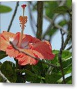 Hawaiian Beauty Metal Print