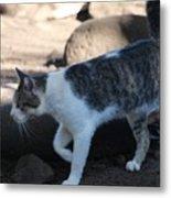 Hawaiian Feral Cat 2 Metal Print