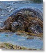 Hawaiian Green Sea Turtle Metal Print