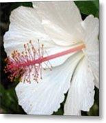 Hawaiian Hibiscus 2 Photograph Metal Print