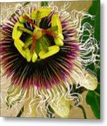 Hawaiian Lilikoi Metal Print