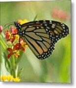 Hawaiian Monarch 1 Metal Print
