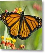 Hawaiian Monarch 3 Metal Print