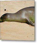 Hawaiian Monk Seal Metal Print