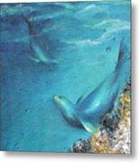 Hawaiian Monk Seals Metal Print