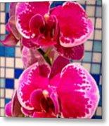 Hawaiian Orchid 1 Metal Print