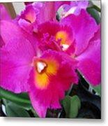 Hawaiian Orchid 3 Metal Print