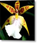 Hawaiian Orchid 32 Metal Print