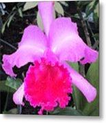 Hawaiian Orchid 33 Metal Print