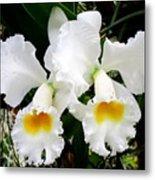 Hawaiian Orchid 35 Metal Print