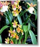 Hawaiian Orchid 36 Metal Print
