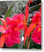 Hawaiian Orchid 37 Metal Print
