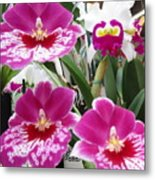 Hawaiian Orchid 5 Metal Print
