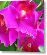 Hawaiian Orchid 8 Metal Print