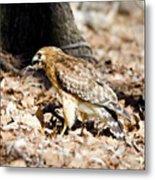 Hawk And Gecko Metal Print by George Randy Bass