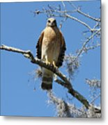 Hawk Eye Contact Metal Print