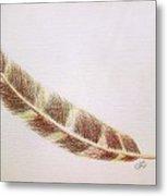 Hawk Feather Metal Print