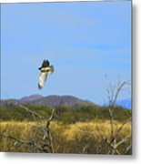 Hawk In Flight Over The Desert Metal Print