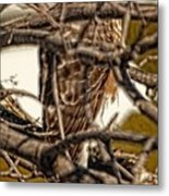Hawk King Outside My Window Metal Print