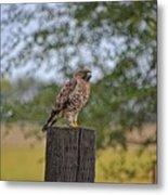 Hawk On A Fence Post Metal Print