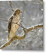 Hawk On Lookout Metal Print by George Randy Bass