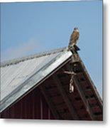 Hawk On The Barn Metal Print