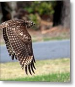 Hawk On The Fly Metal Print
