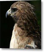 Hawk Portrait Metal Print