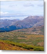 Hawk Soaring Over Guanella Pass In The Arapahoe National Forest Metal Print