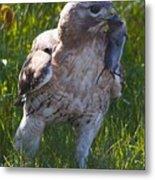 Hawk With Dinner Metal Print
