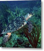 Hawksbill Sea Turtle 7 Metal Print
