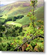 Hawthorn Branch With View To Wicklow Hills. Ireland Metal Print