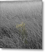 Hay Daisy In The Fog Metal Print