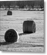 Hay Is For Horses Metal Print