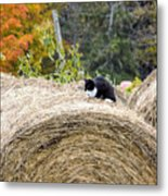 Hay Kitty Metal Print