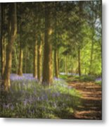 Hay Wood Bluebells 3 Metal Print