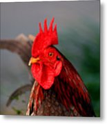 He Is The First In The Morning Metal Print
