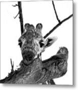 Head In The Trees Metal Print