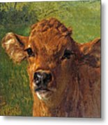 Head Of A Calf Metal Print