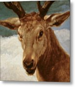 Head Of A Stag Metal Print