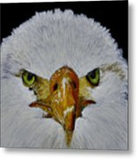 Head Of An Eagle  Metal Print
