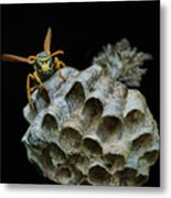Head-on - Paper Wasp - Nest Metal Print